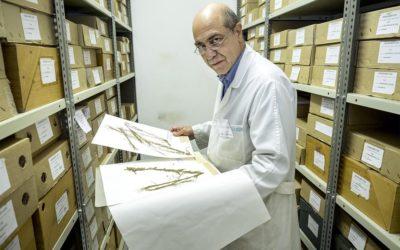 """""""Merino fixo a primeira flora moderna de España"""""""
